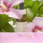 Eminence Willow Bark Serum