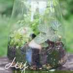 Gorgeous DIY Terrariums….