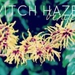 Witch Hazel-An Affordable DO-IT-ALL Every Beauty Cabinet Should Have!