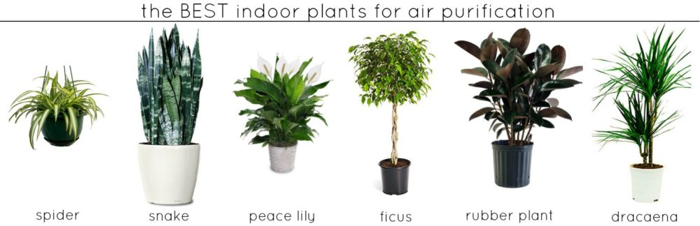 Plants that help with air purification