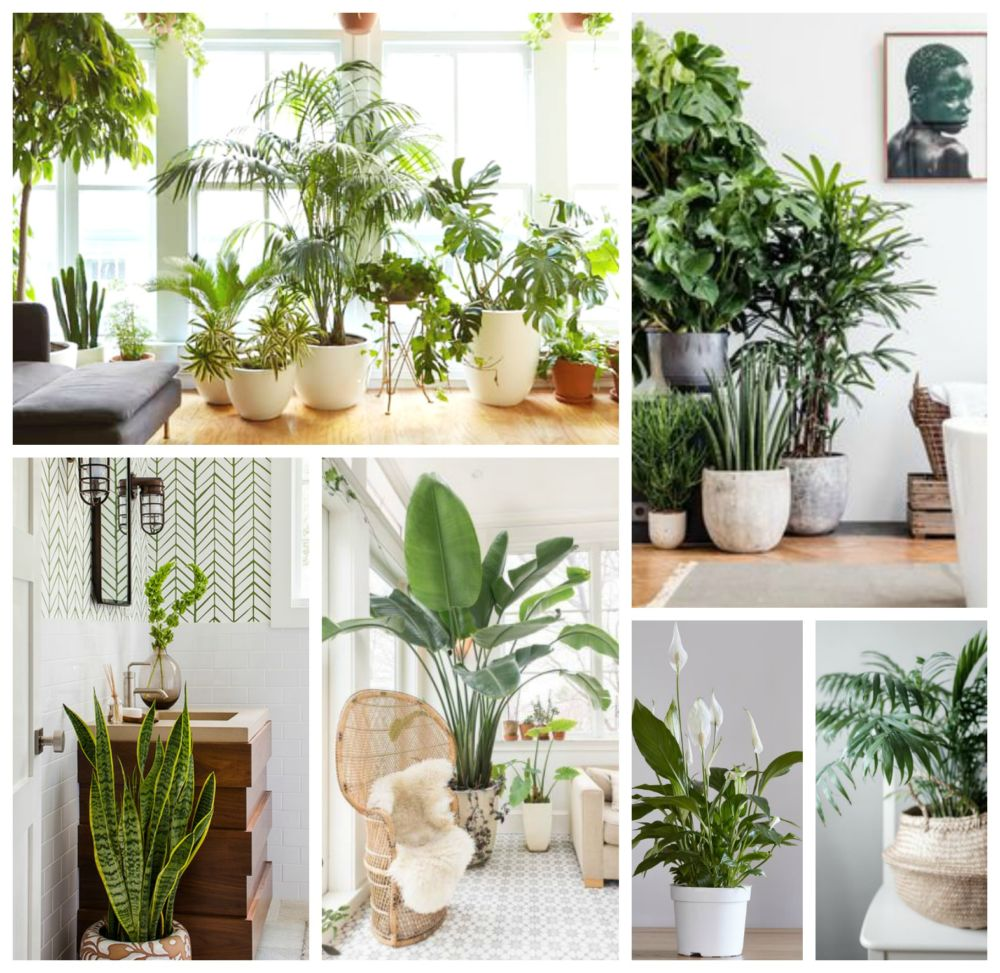 Plants and air purification